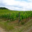 L'Alsace, encore une fois !