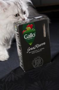Mon chat a l'air intéressé :-)
