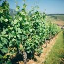 Petit lexique sur les Vins d'Alsace – Mieux comprendre le vin